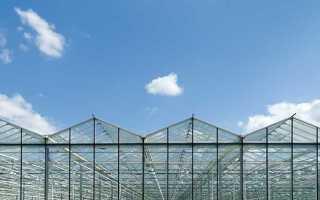 Голландские теплицы: особенности конструкции и технологии выращивания