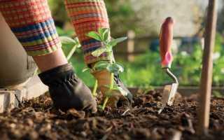 Без вреда для урожая: избавляемся от паразитов в огороде