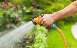 Скорее воды: как правильно поливать огород в жару