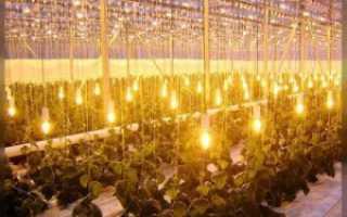 Освещение Теплицы Для Огурцов: Детальная Инструкция
