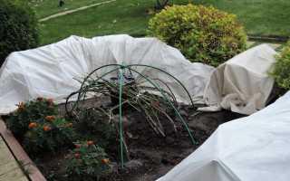 Розы осенью: 5 частых ошибок в уходе, которые могут испортить растение