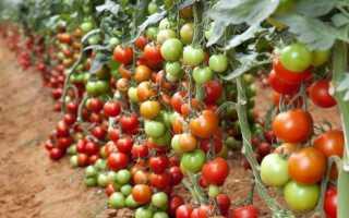 Удобрения для томатов: в какой период, каким составом и в какой дозировке подкормить помидоры