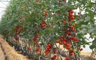 Расположение грядок в теплице для выращивания томатов различных типов