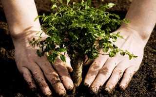 5 важных особенностей осенней посадки деревьев, о которых стоит знать каждому дачнику