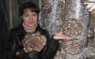 Выращивание грибов в теплице: как развести грибы в теплице