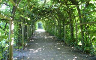 Пергола своими руками из дерева и металла для винограда и роз + фото арки в ландшафтном дизайне