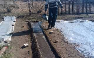 Выращивание редиса в теплице: когда сажать и как ухаживать за редиской
