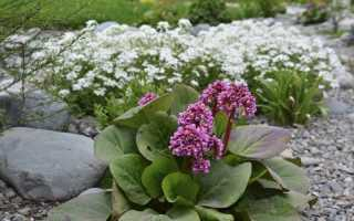 Не только ёлка: 12 эффектных вечнозеленых растений для сада