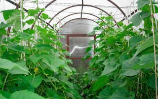Формирование огурцов в теплице: подвязка, прищипывание, удаление листьев, пасынкование