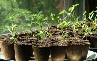 Проблемы при выращивании рассады: семена не всходят, не сбрасывают оболочку, вытягиваются, изменяется окраска листьев