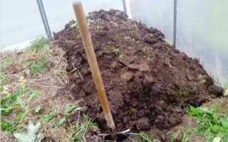 Выращивание баклажанов в теплице: как правильно выращивать + видео