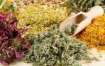 Выращивание лекарственных растений в саду