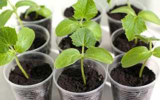 Как сажать рассаду, чтобы не повредить корни при пересадке