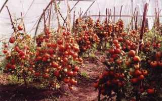 Сорта и гибриды низкорослых томатов для любого типа грунта