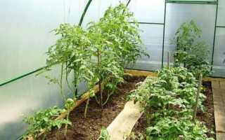 Сборка теплицы из поликарбоната: установка по инструкции с учетом опыта садоводов + видео
