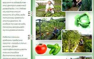 Урожайный грядки Игоря Лядова: подробности новой технологии выращивания