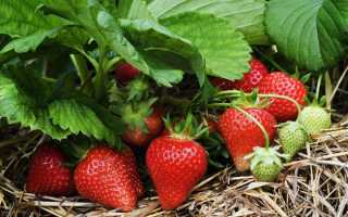 Заготовки на следующий год: чем подпитать клубнику после сбора урожая