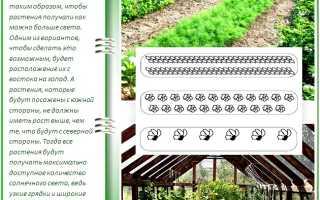 Как сделать узкие грядки: делаем огород на узких грядках (лучшие методы)
