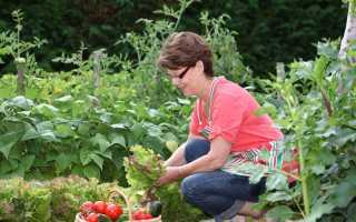 Почему в огород стоит идти на сытый желудок