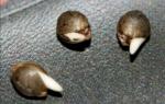 Как повысить всхожесть семян: растворы для замачивания