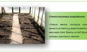Осенние работы в теплице: секреты бывалых дачников-огородников