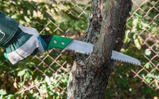 Открытая рана: обрабатываем срезы плодовых деревьев