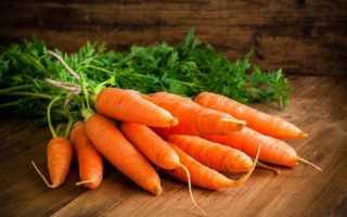 Морковь – свежая и сочная круглый год