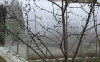 Подготовка теплицы к зиме: уборка и дезинфекция