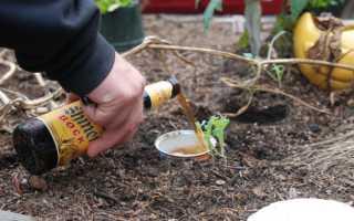 Голые вредители: 7 простых способов вывести слизней на огороде