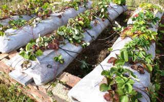 Выращивание клубники в мешках круглый год: пошаговое руководство