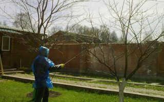 Обработка сада от вредителей и болезней весной: когда и чем опрыскивать
