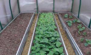 Грядки в теплице из поликарбоната своими руками: планировка и устройство теплых грядок повысят урожай