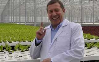 Выращивание салата в теплице: как вырастить ранний салат в теплице