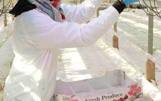 Выращивание клубники в теплице и в открытом грунте по голландской и финской технологиям