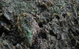 Почему в теплице зеленеет земля: четкие ответы и полезные советы