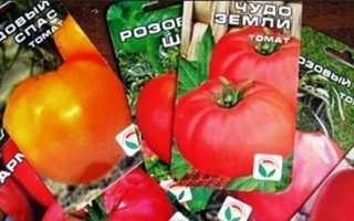 Сорта томатов для теплиц: лучшие урожайные помидоры для закрытого грунта