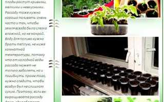 Когда сажать перец на рассаду: все про правильный посев и уход