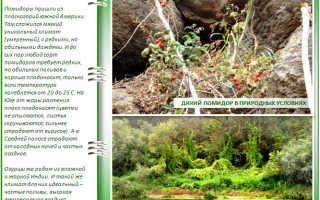 Помидоры и огурцы в одной теплице: создаем раздельный микроклимат