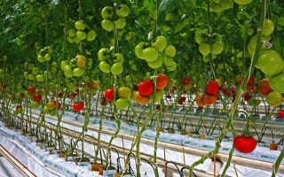 Правильная подвязка помидор в теплице: приспособления, способы подвязки
