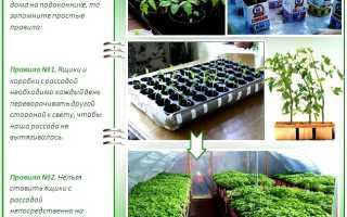 Рассада помидор в домашних условиях: когда сажать, как вырастить и др.