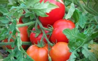 Требованию к выращиванию томатов