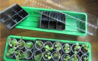 Домашние Мини Парники Для Выращивания Рассады