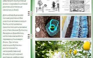 Умные грядки для высокого урожая: правила выращивания супер-овощей