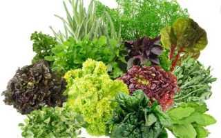 Выращивание зелени в теплицах на продажу круглый год: петрушка, укроп и салат