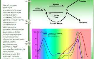 Освещение теплиц: какие светильники лучше + нормы на спетовой спектр
