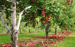 Объявляем посадку: правильно высаживаем плодовые деревья летом
