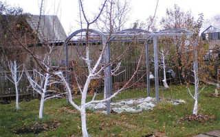 Обработка сада от вредителей и болезней осенью + видео