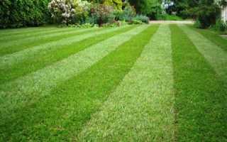Газон: виды и особенности выращивания