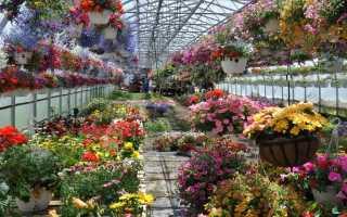 Стеллажи Для Цветов Самостоятельно: Все Варианты
