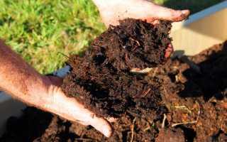 5 натуральных удобрений для сада и огорода своими руками